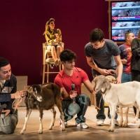 Goats de Liwaa Yazji, mise en scène par Hamish Pirie, Royal Court Theatre. De la consolation des chèvres comme métaphore.